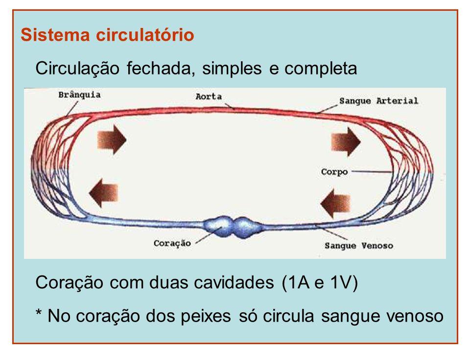 Sistema circulatório Circulação fechada, simples e completa.
