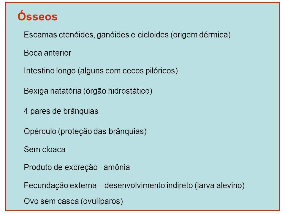 Ósseos Escamas ctenóides, ganóides e cicloides (origem dérmica)