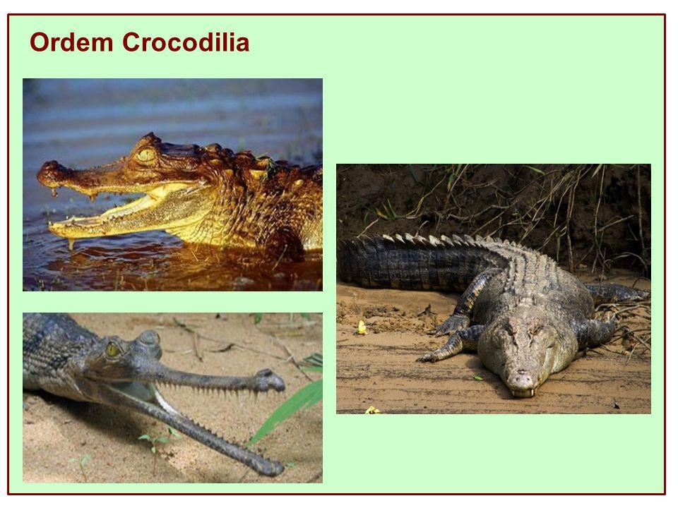 Ordem Crocodilia
