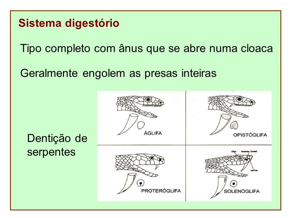 Sistema digestório Tipo completo com ânus que se abre numa cloaca. Geralmente engolem as presas inteiras.