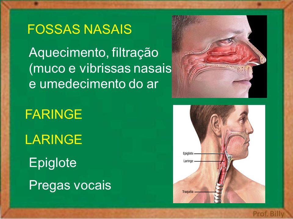 FOSSAS NASAIS Aquecimento, filtração. (muco e vibrissas nasais) e umedecimento do ar. LARINGE. FARINGE.