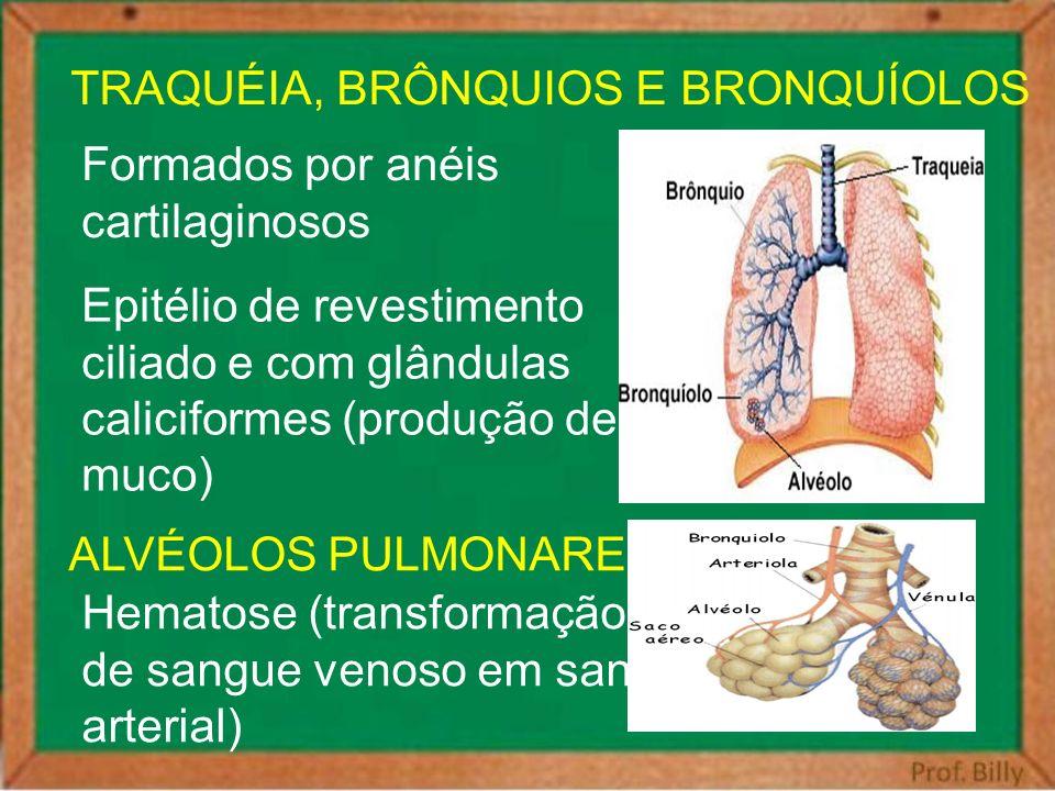 TRAQUÉIA, BRÔNQUIOS E BRONQUÍOLOS