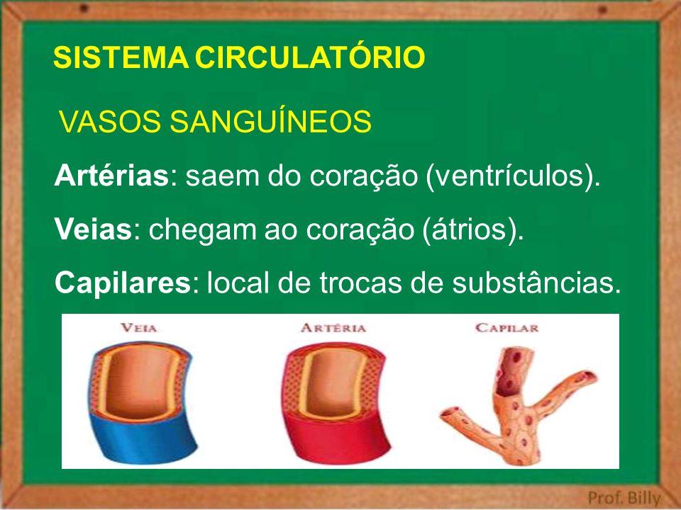 SISTEMA CIRCULATÓRIO VASOS SANGUÍNEOS. Artérias: saem do coração (ventrículos). Veias: chegam ao coração (átrios).