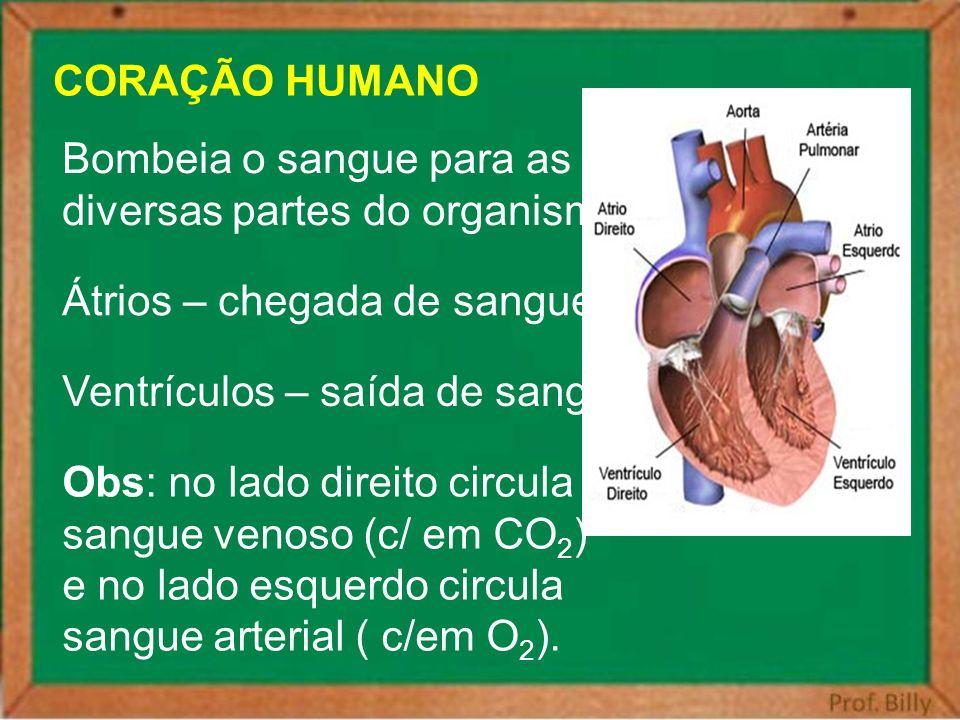 CORAÇÃO HUMANO Bombeia o sangue para as. diversas partes do organismo. Átrios – chegada de sangue.