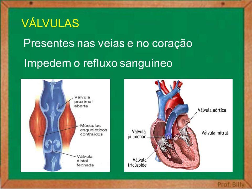VÁLVULAS Presentes nas veias e no coração Impedem o refluxo sanguíneo
