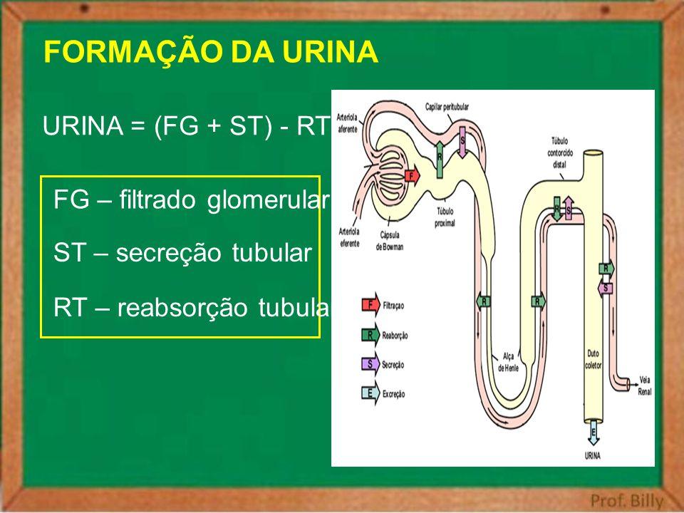 FORMAÇÃO DA URINA URINA = (FG + ST) - RT FG – filtrado glomerular