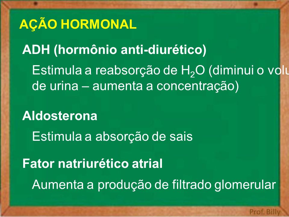 AÇÃO HORMONAL ADH (hormônio anti-diurético) Estimula a reabsorção de H2O (diminui o volume. de urina – aumenta a concentração)