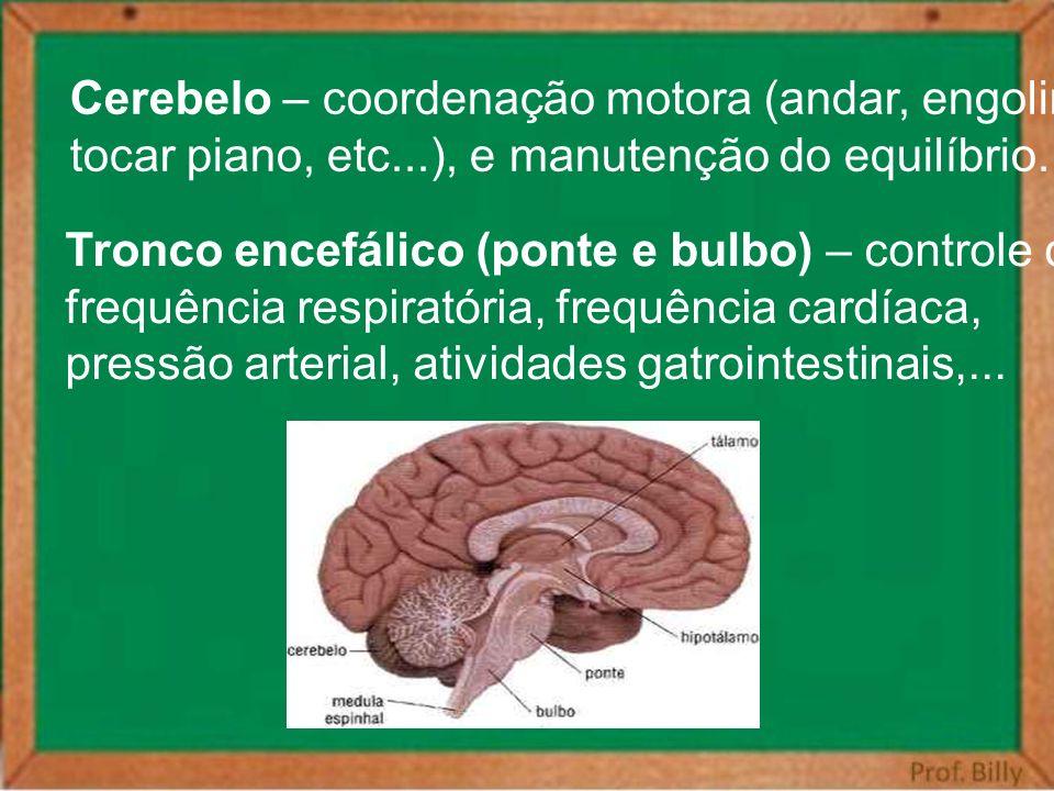 Cerebelo – coordenação motora (andar, engolir,