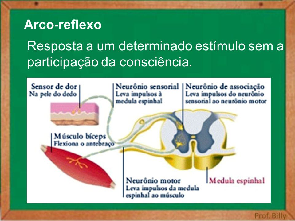 Arco-reflexo Resposta a um determinado estímulo sem a participação da consciência.
