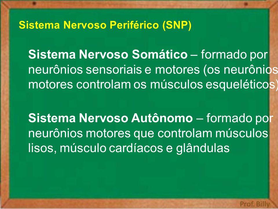 Sistema Nervoso Somático – formado por