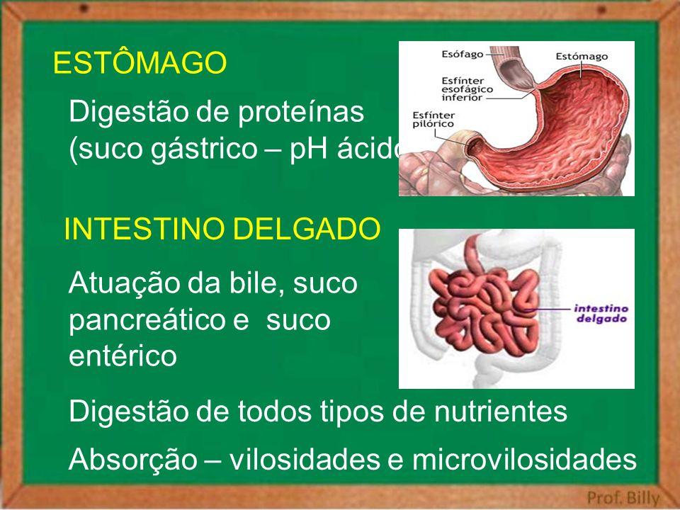 ESTÔMAGO Digestão de proteínas. (suco gástrico – pH ácido) INTESTINO DELGADO. Atuação da bile, suco.