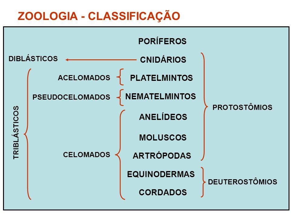 ZOOLOGIA - CLASSIFICAÇÃO