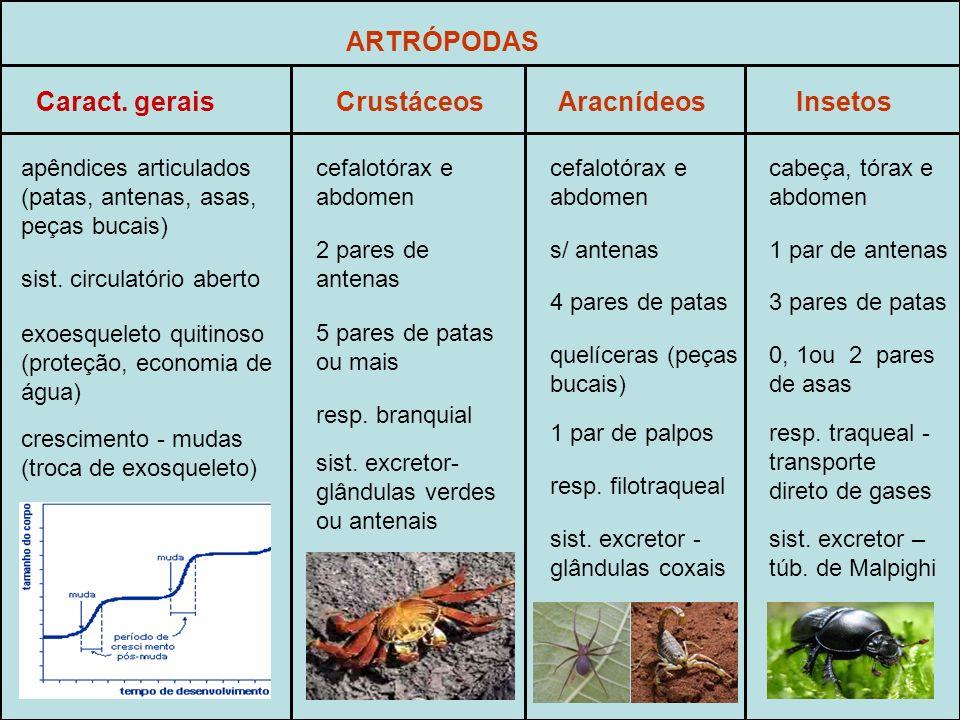 ARTRÓPODAS Caract. gerais Crustáceos Aracnídeos Insetos