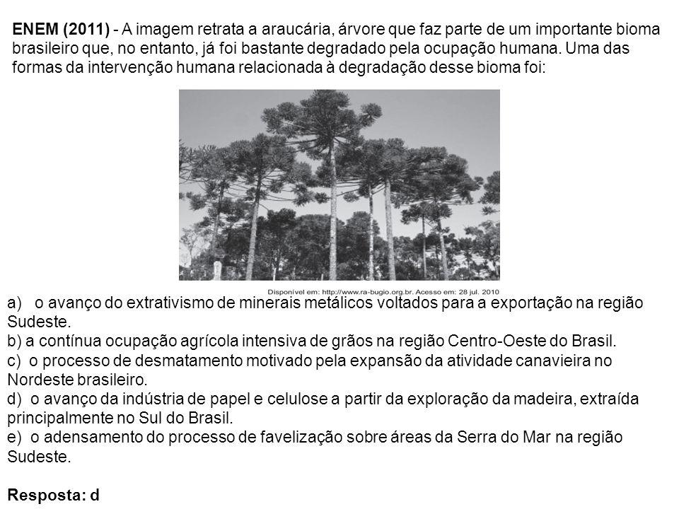 ENEM (2011) - A imagem retrata a araucária, árvore que faz parte de um importante bioma