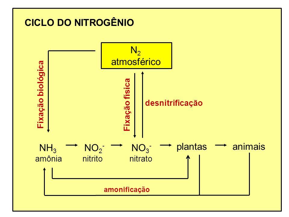CICLO DO NITROGÊNIO N2 atmosférico NH3 NO2- NO3- plantas animais