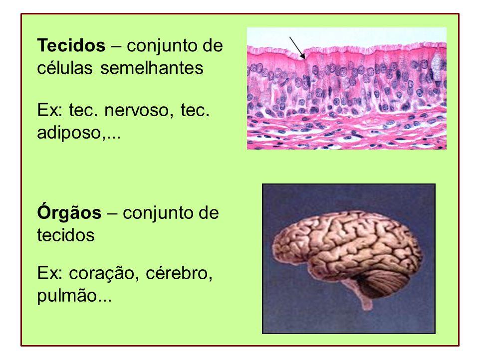 Tecidos – conjunto de células semelhantes. Ex: tec. nervoso, tec. adiposo,... Órgãos – conjunto de.
