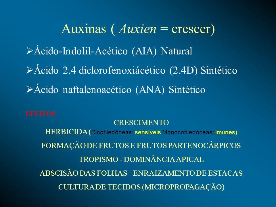 Auxinas ( Auxien = crescer)