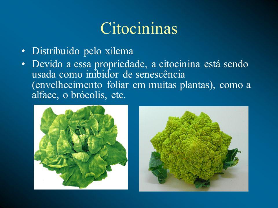 Citocininas Distribuido pelo xilema