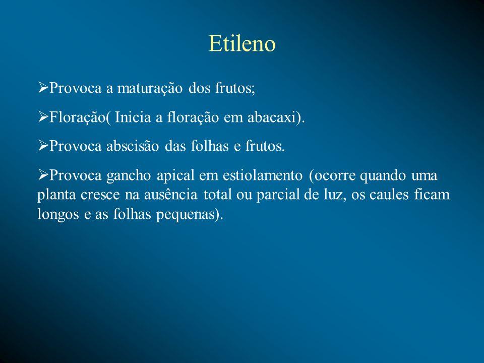 Etileno Provoca a maturação dos frutos;
