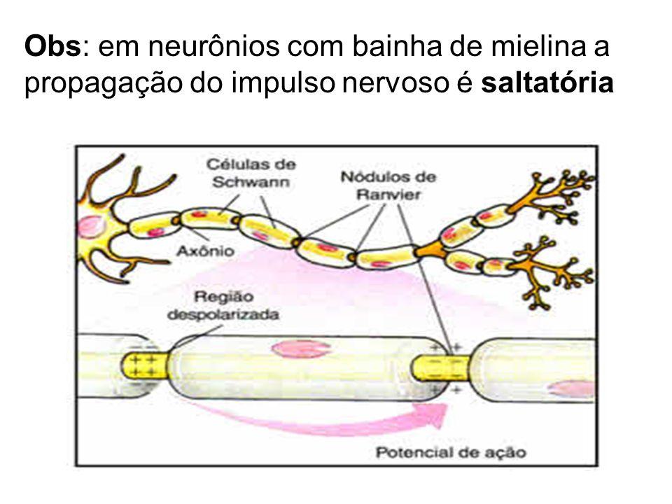 Obs: em neurônios com bainha de mielina a