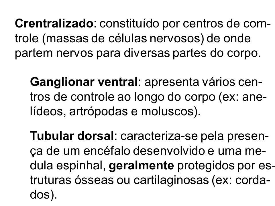 Crentralizado: constituído por centros de com-