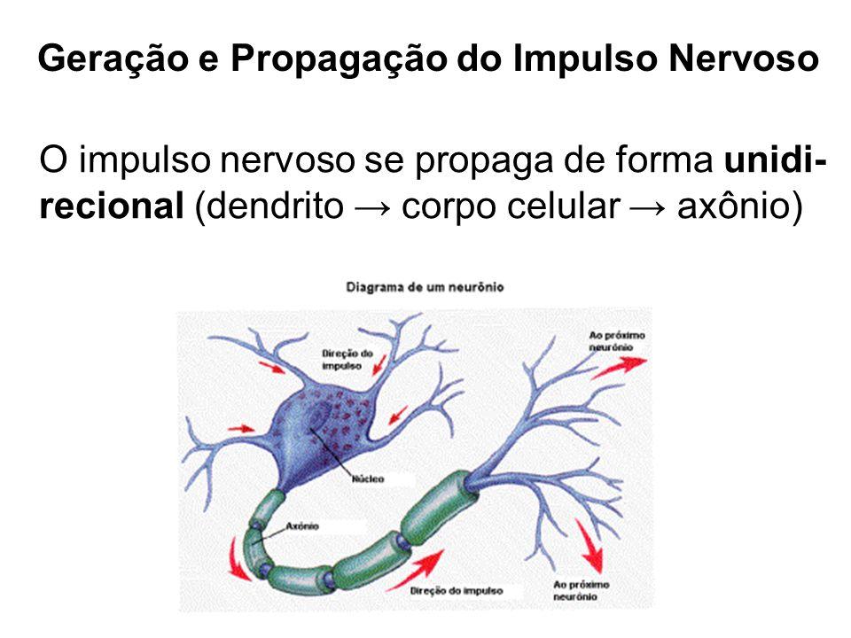 Geração e Propagação do Impulso Nervoso