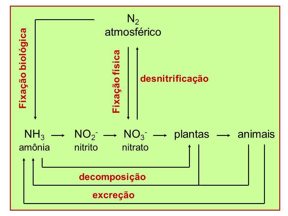 N2 atmosférico NH3 NO2- NO3- plantas animais amônia Fixação biológica