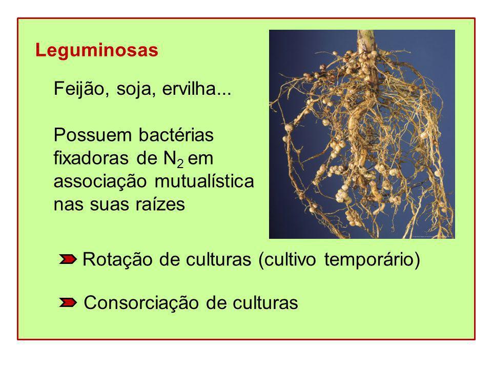 Leguminosas Feijão, soja, ervilha... Possuem bactérias. fixadoras de N2 em. associação mutualística.