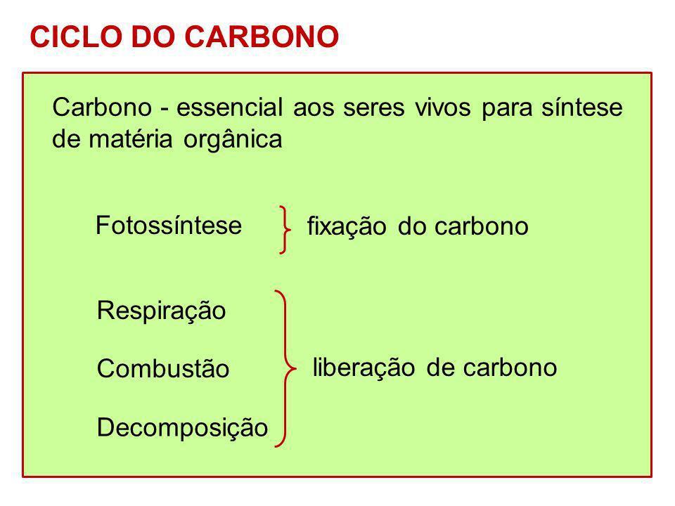 CICLO DO CARBONO Carbono - essencial aos seres vivos para síntese