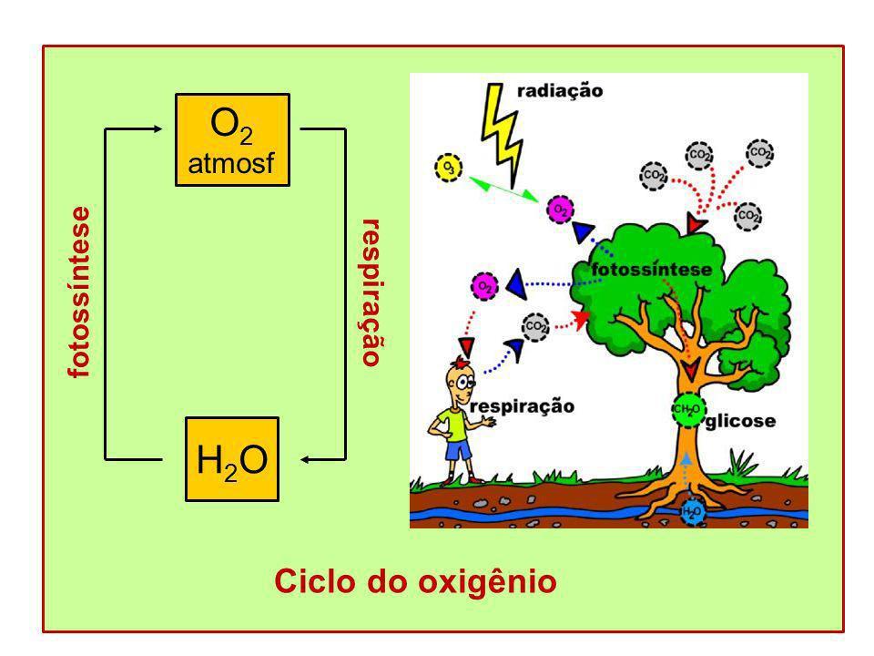 Ciclo do oxigênio O2 atmosf fotossíntese H2O respiração