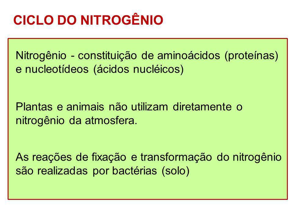 CICLO DO NITROGÊNIO Nitrogênio - constituição de aminoácidos (proteínas) e nucleotídeos (ácidos nucléicos)