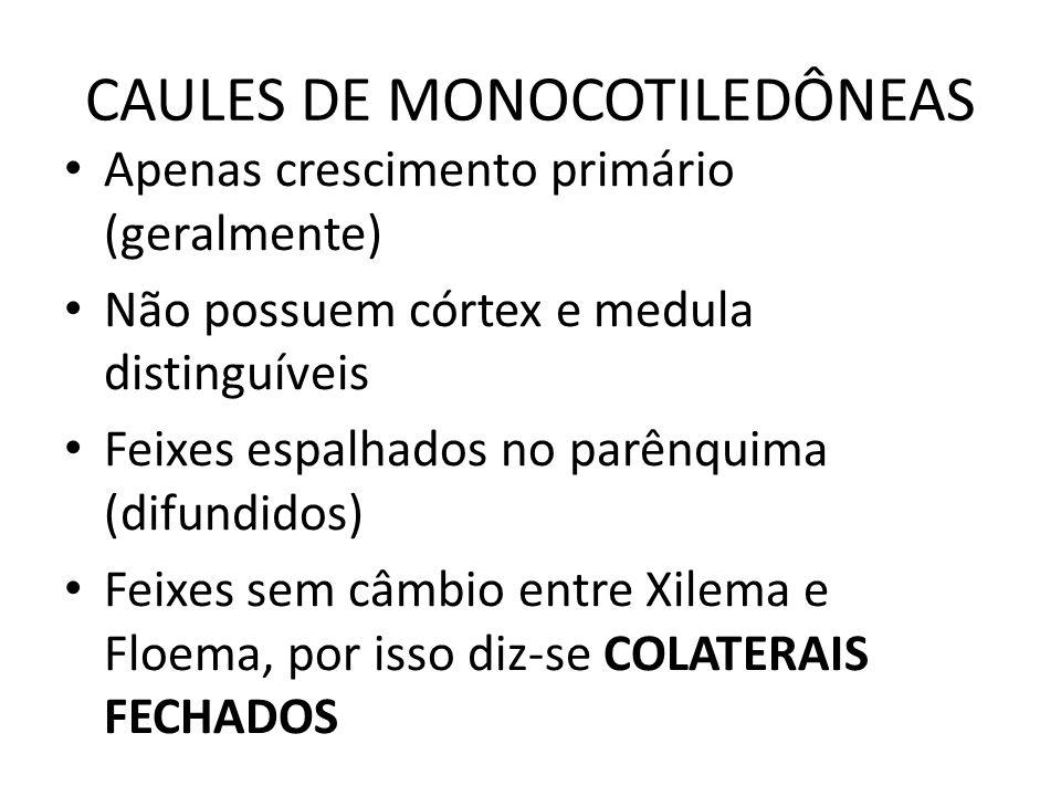 CAULES DE MONOCOTILEDÔNEAS
