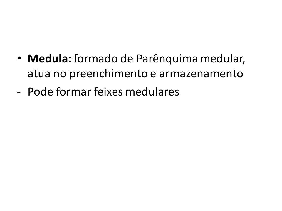 Medula: formado de Parênquima medular, atua no preenchimento e armazenamento