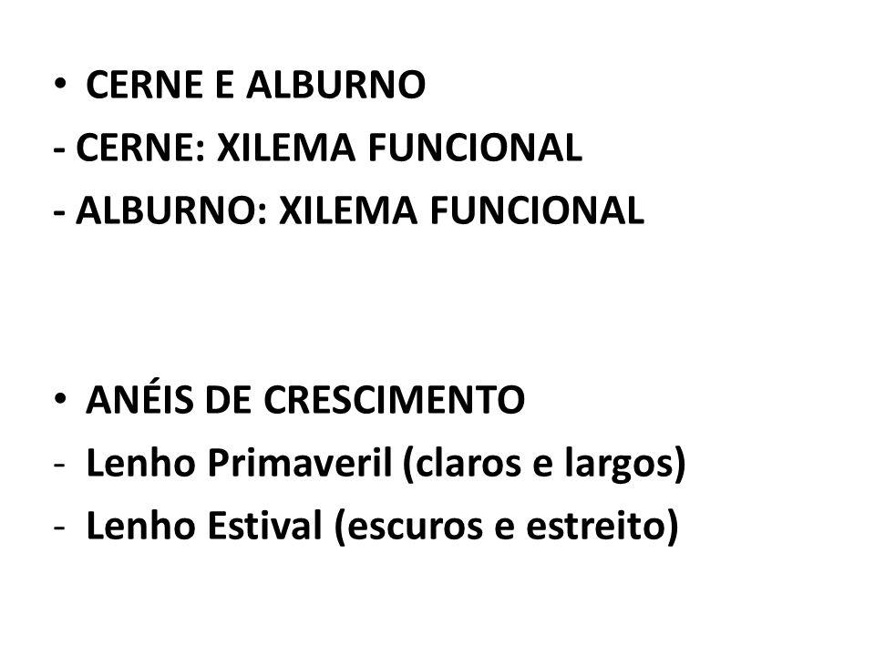 CERNE E ALBURNO - CERNE: XILEMA FUNCIONAL. - ALBURNO: XILEMA FUNCIONAL. ANÉIS DE CRESCIMENTO. Lenho Primaveril (claros e largos)