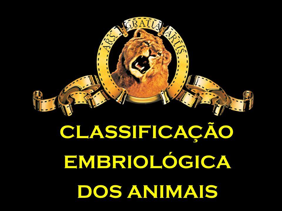 CLASSIFICAÇÃO EMBRIOLÓGICA DOS ANIMAIS