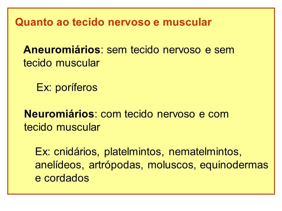 Quanto ao tecido nervoso e muscular