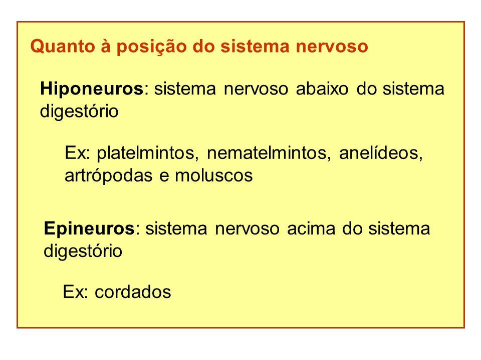 Quanto à posição do sistema nervoso