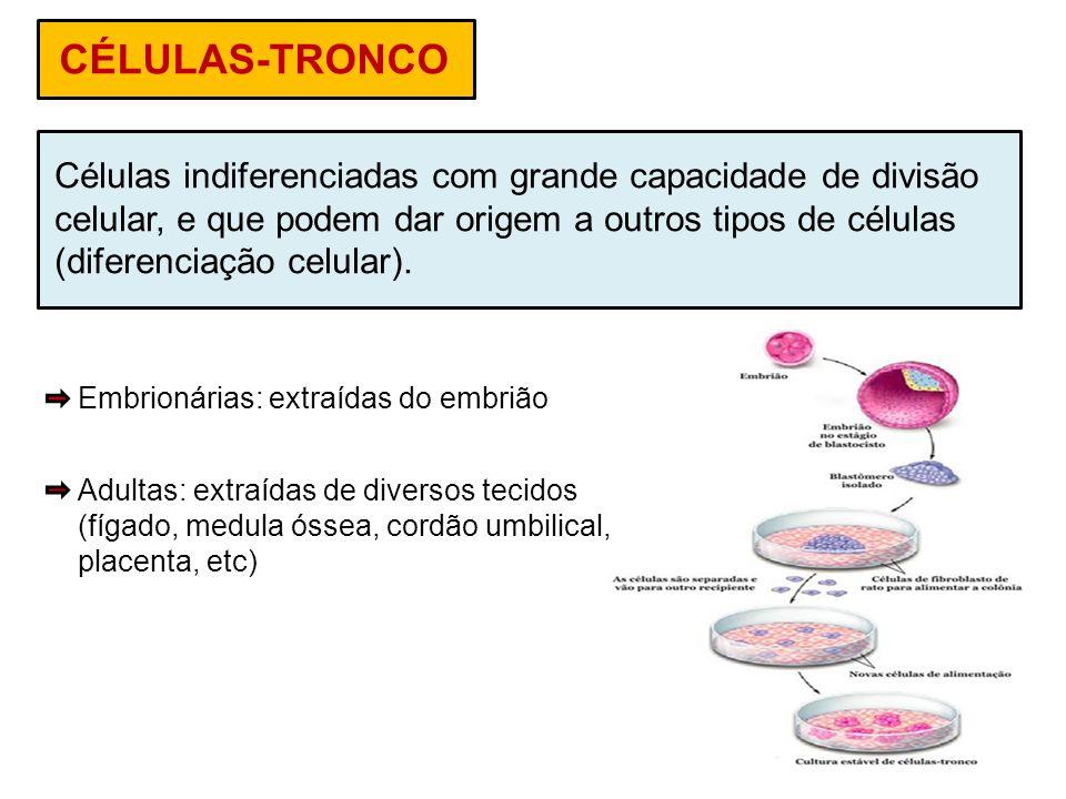CÉLULAS-TRONCO Células indiferenciadas com grande capacidade de divisão. celular, e que podem dar origem a outros tipos de células.