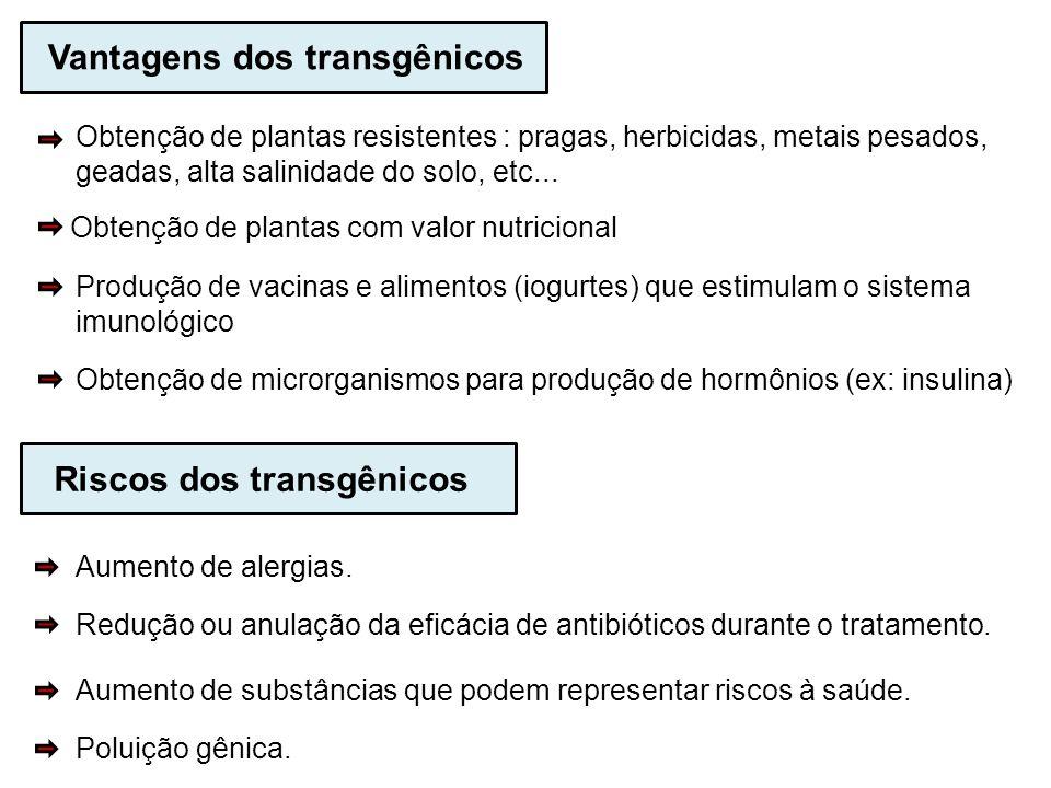 Vantagens dos transgênicos