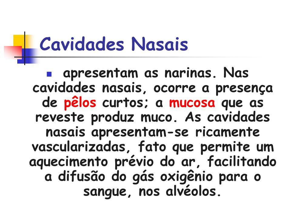 Cavidades Nasais