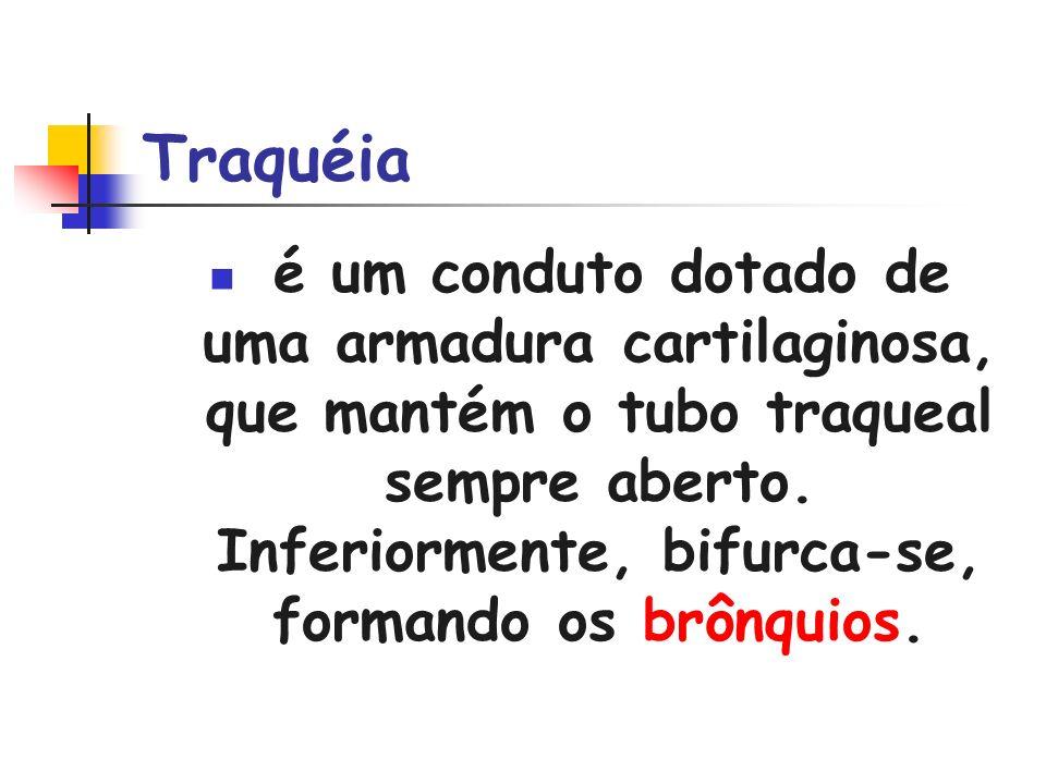 Traquéia