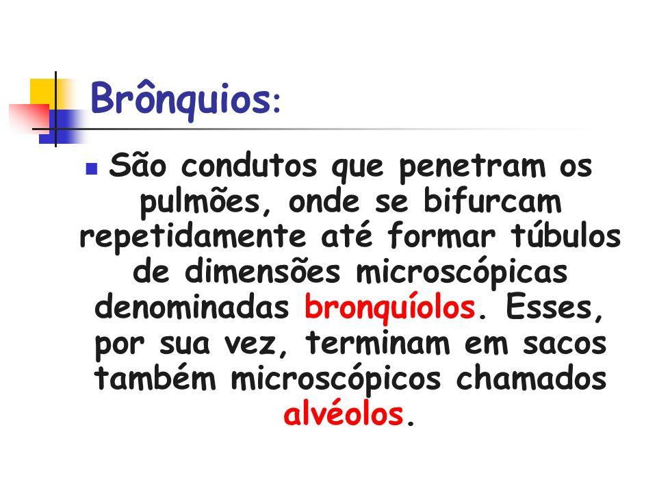 Brônquios: