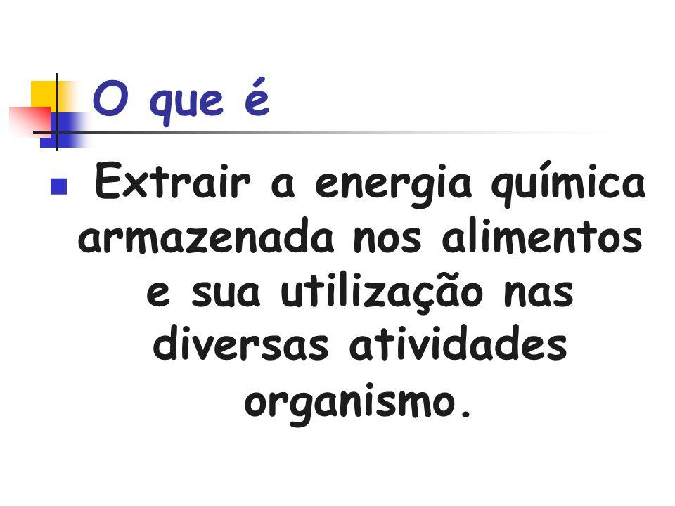 O que éExtrair a energia química armazenada nos alimentos e sua utilização nas diversas atividades organismo.
