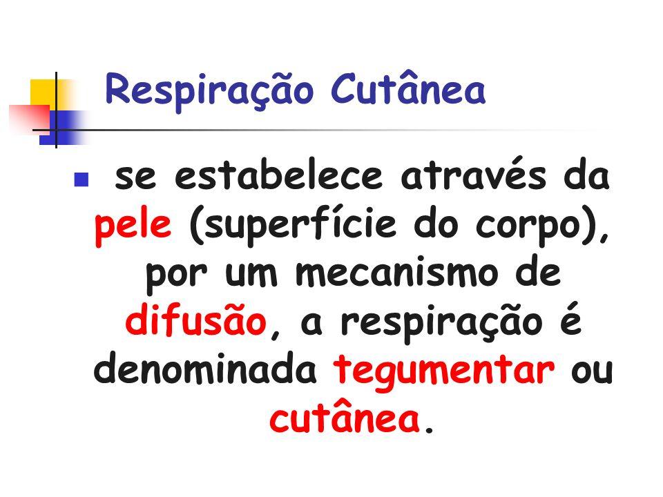 Respiração Cutânea se estabelece através da pele (superfície do corpo), por um mecanismo de difusão, a respiração é denominada tegumentar ou cutânea.