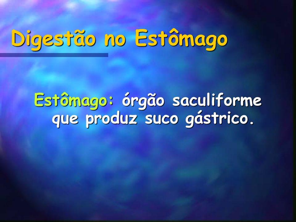 Estômago: órgão saculiforme que produz suco gástrico.