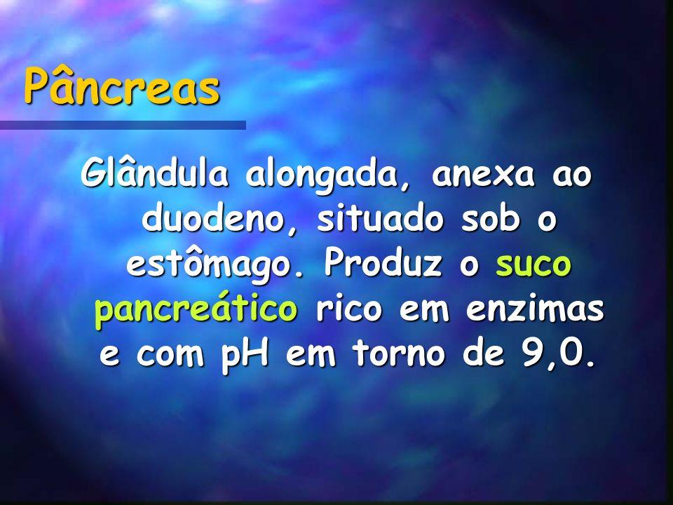 Pâncreas Glândula alongada, anexa ao duodeno, situado sob o estômago.