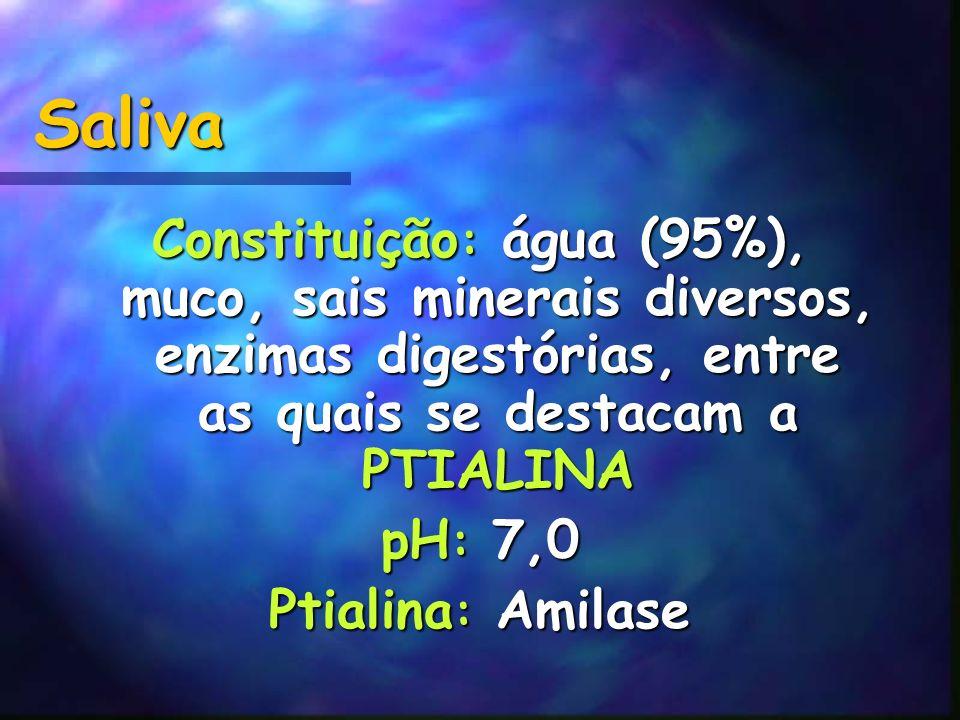 Saliva Constituição: água (95%), muco, sais minerais diversos, enzimas digestórias, entre as quais se destacam a PTIALINA.