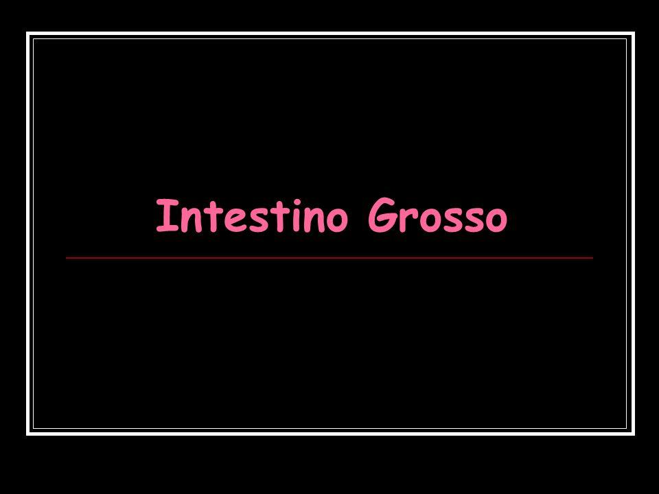 Intestino Grosso