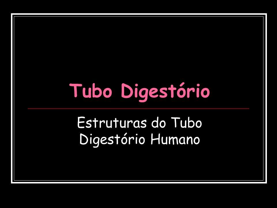 Estruturas do Tubo Digestório Humano