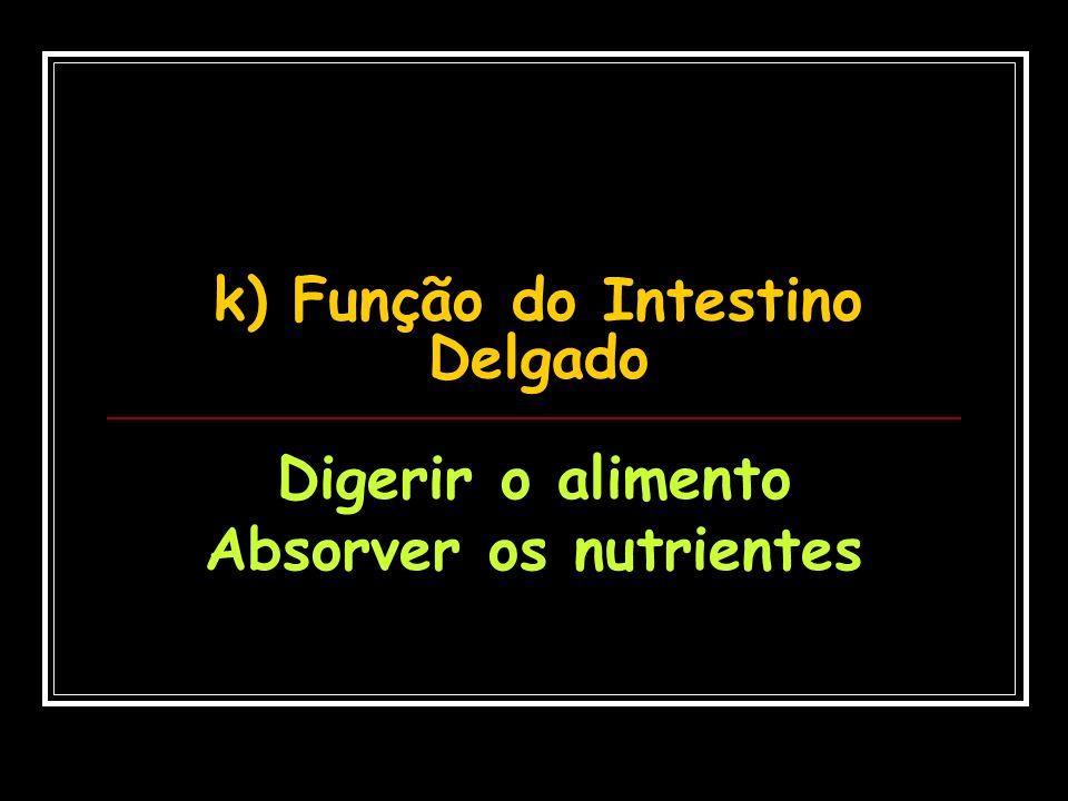 k) Função do Intestino Delgado
